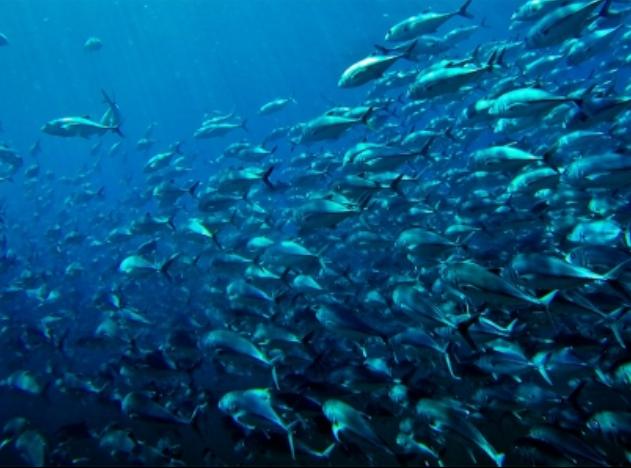 Calentamiento-disminuye-peces.png