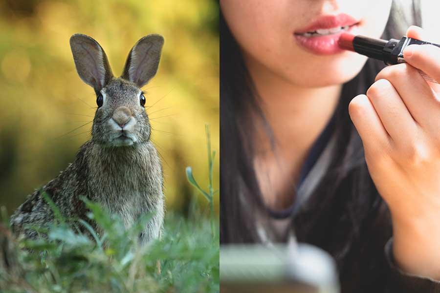 Pruebas-Animales.jpg