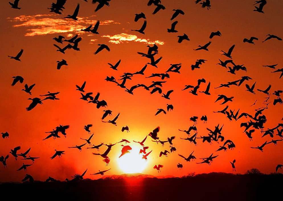 Día-Mundial-de-las-Aves-Migratorias.jpg