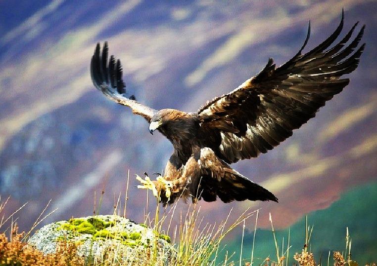 Santuario-del-águila-real-en-Zacatecas.jpeg