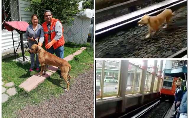 perros-rescatados-metro.jpg