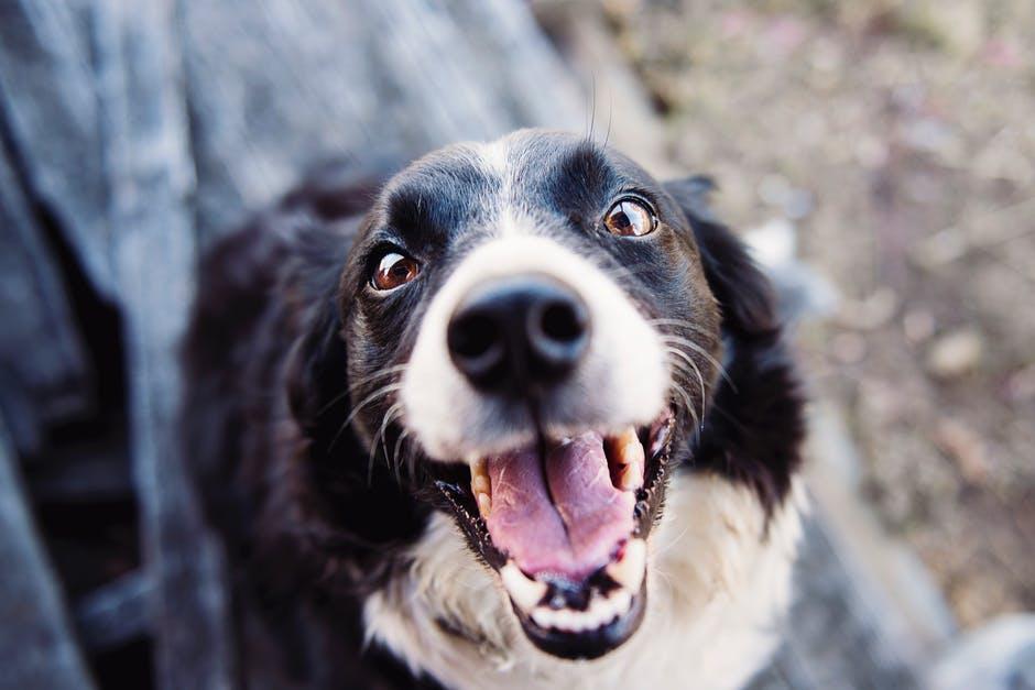 Iniciativa-DogHero1.jpeg