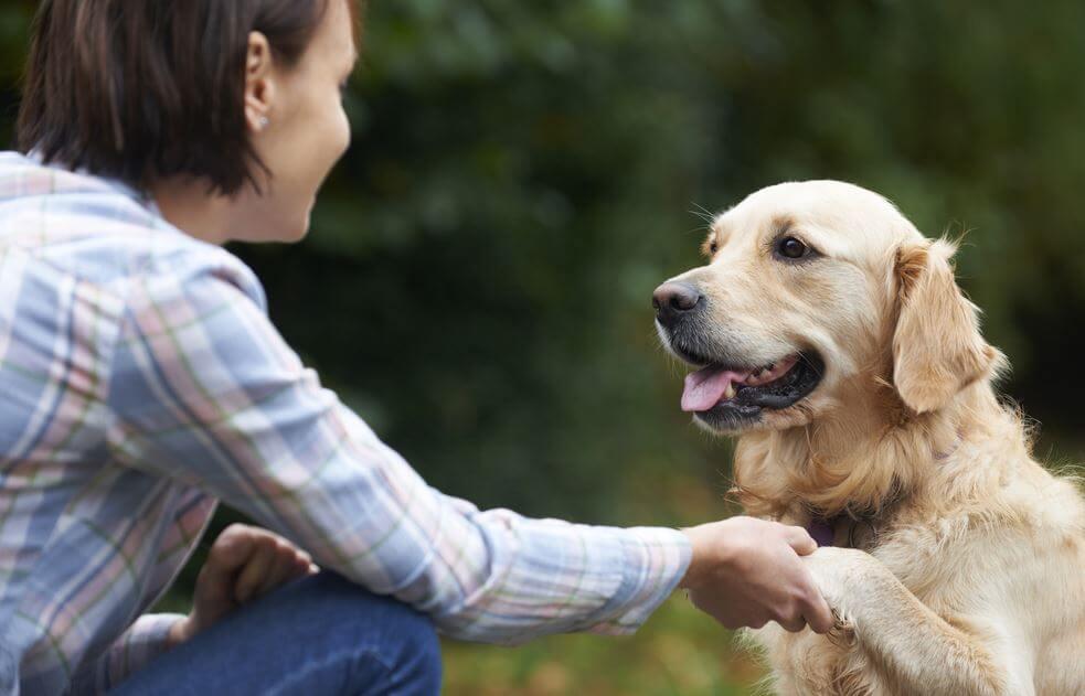 Perros-interpretan-emociones-de-sus-dueños.jpg