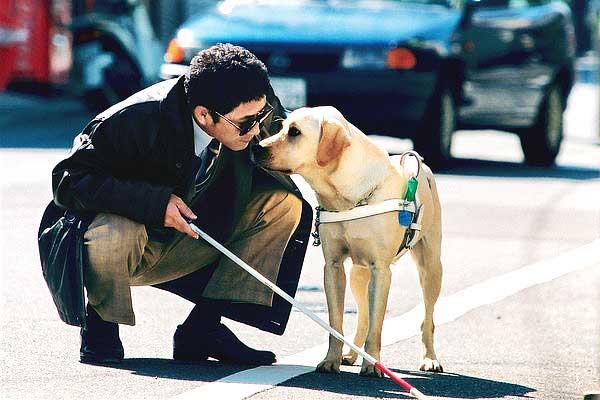 perro-guia-cachorros-practicando.jpg