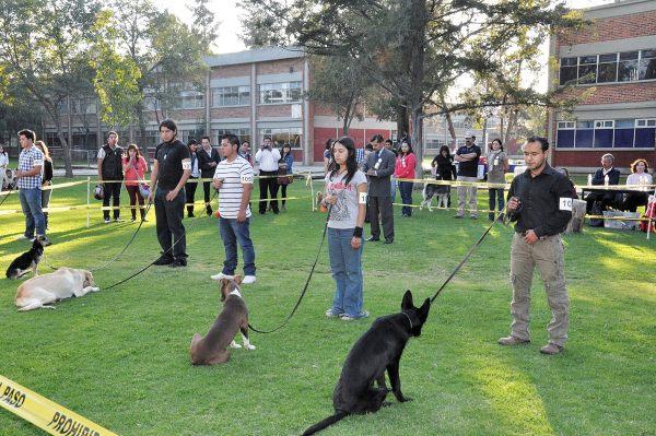 Clases-Perros-UNAM.jpg