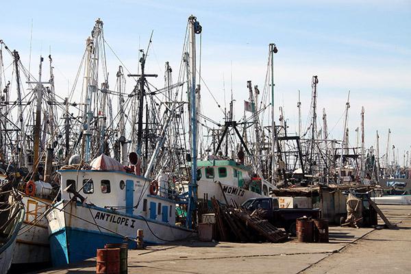 Demandan-más-acciones-contra-la-pesca-furtiva-en-Yucatán.jpg