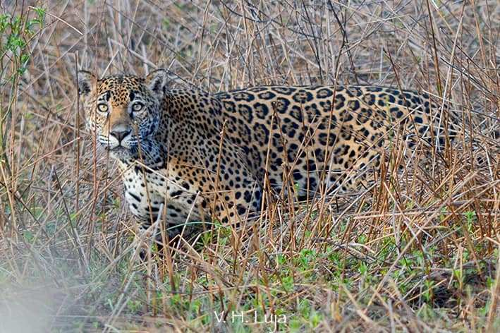 Habitat-Jaguares.jpg