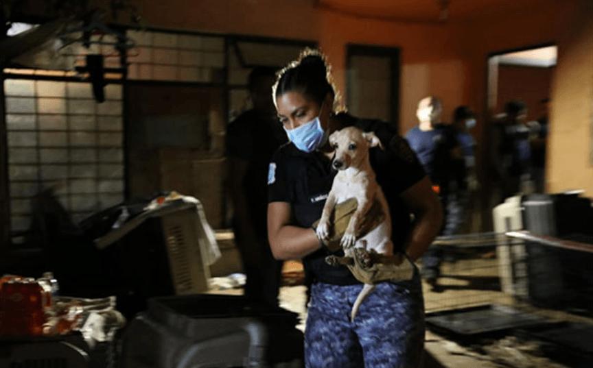 Perros-rescatado-GAM.png