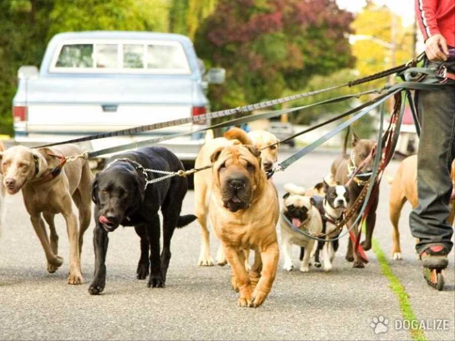 pasear-perros.jpg