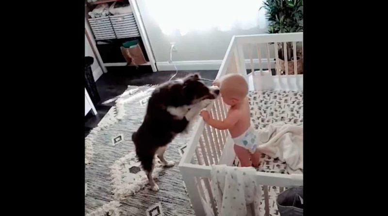 perrito-calma-a-bebé.jpg