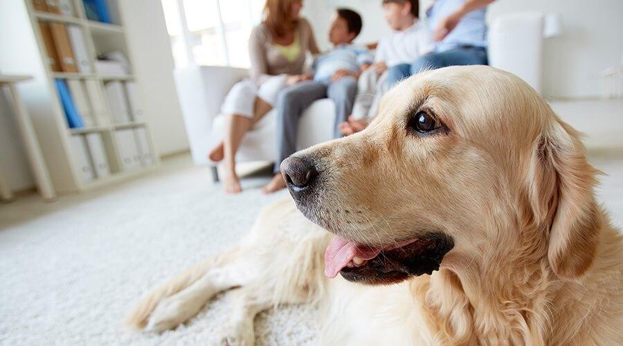 responsabilidad-de-los-dueños-de-mascotas.jpg